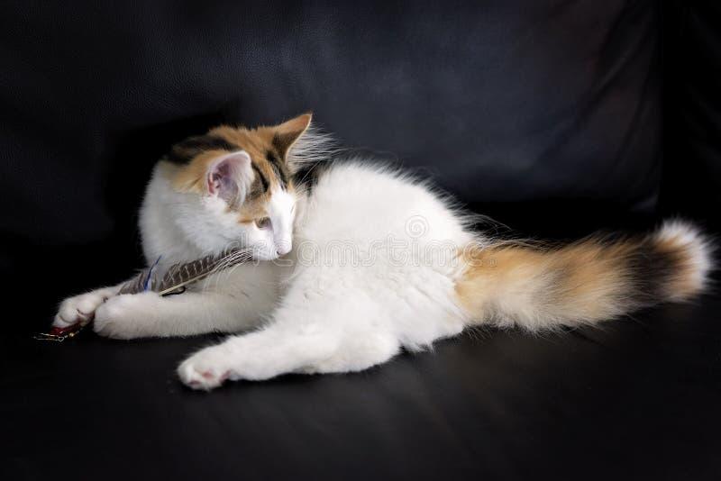 Noors Forest Cat stock afbeelding