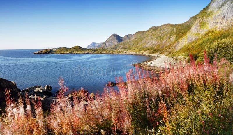 Noorwegen, het Landschap van de Aardberg, Lofoten stock fotografie