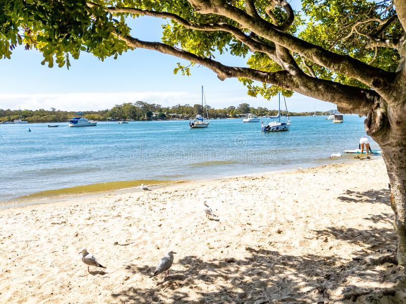 Noosa river side. Boats, seagulls stock image