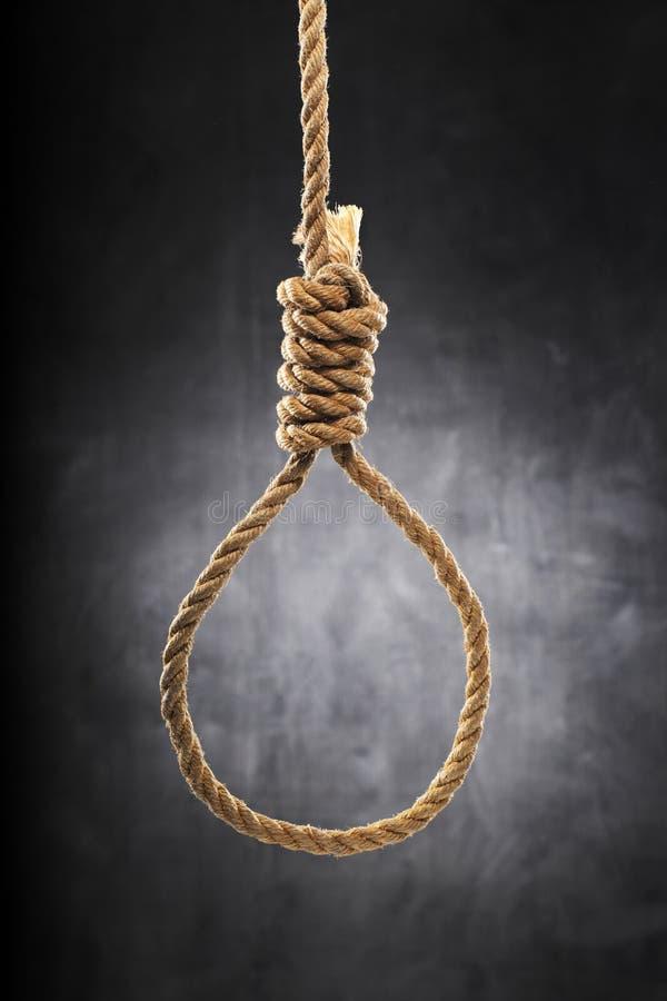 Download Noose stock photo. Image of loop, penalty, hangs, hanging - 19529368