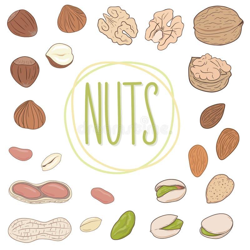 Nootinzameling Okkernoten, amandelen, pistaches, pinda's, hazelnoten Reeks vectorhand getrokken geschilde noten, en geheel vector illustratie
