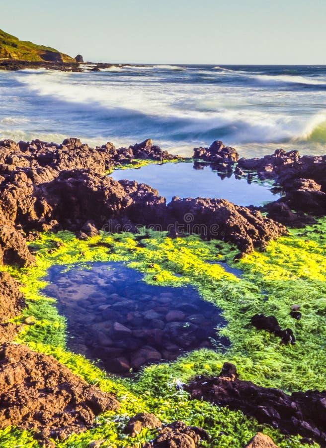 Nord-Kalifornien-Küste lizenzfreies stockbild