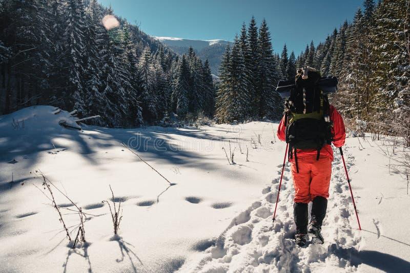 Nordic che cammina in inverno fotografia stock libera da diritti