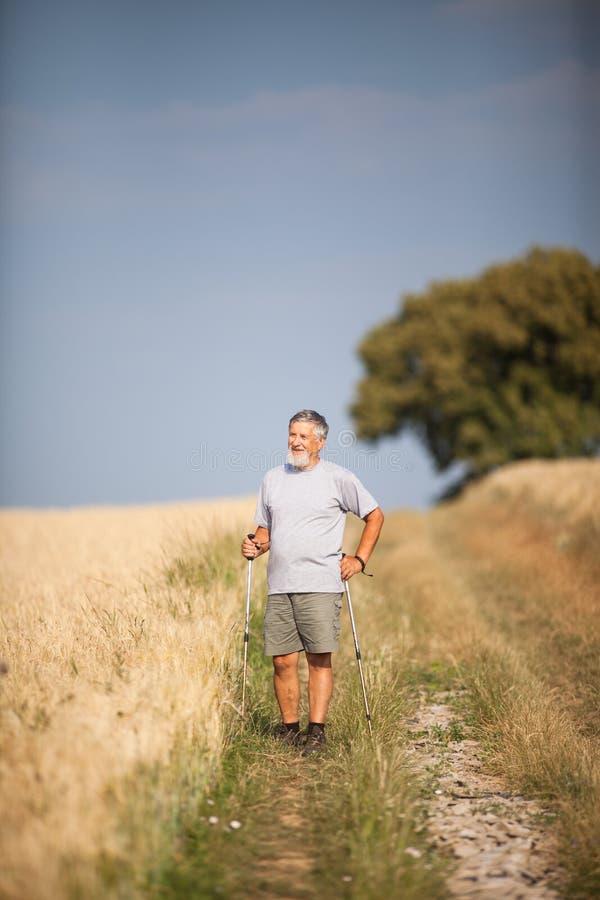 Nordic hermoso activo del hombre mayor que camina al aire libre imagen de archivo libre de regalías
