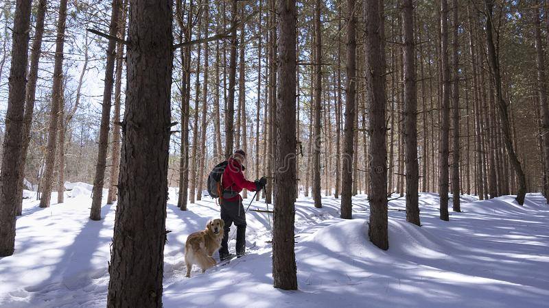 Nordic skier in the forest with his dog stock photo