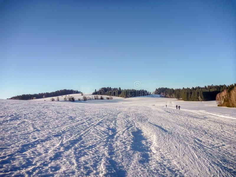 Nordic skiing trails on snowy plains with coniferous trees near Nove Mesto na Morave. Czech-Moravian highlands, Czech Republic royalty free stock photo