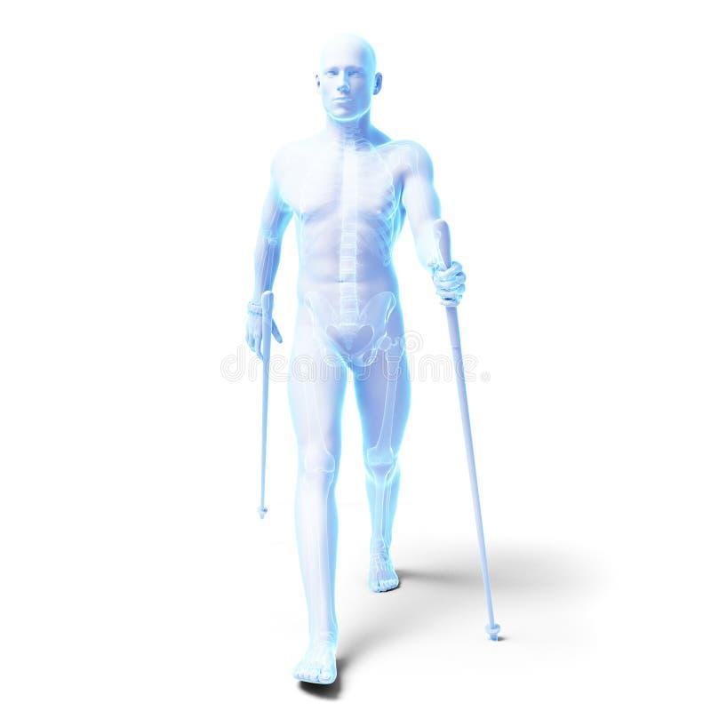 Nordic walking. 3d rendered medical illustration - nordic walking stock illustration