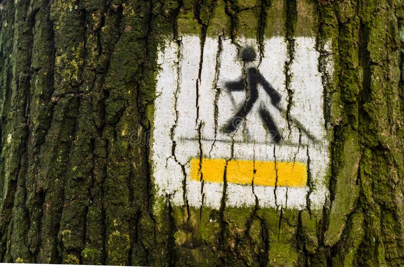 Nordic walking track sign painted on the tree in the forest sunny day royalty free stock photography