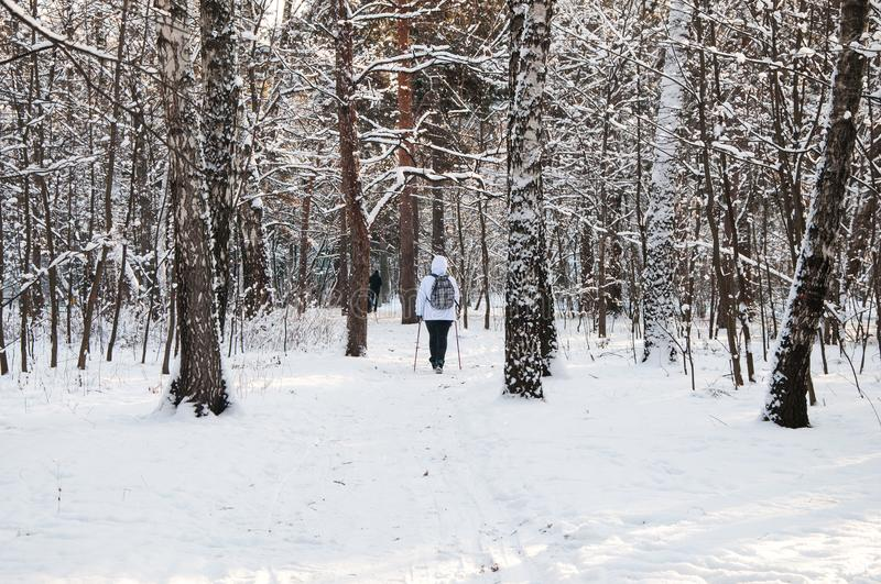 Nordic walking. Woman in a white jacket with a backpack hiking in a cold forest. Scenic beautiful landscape with snow.  royalty free stock images
