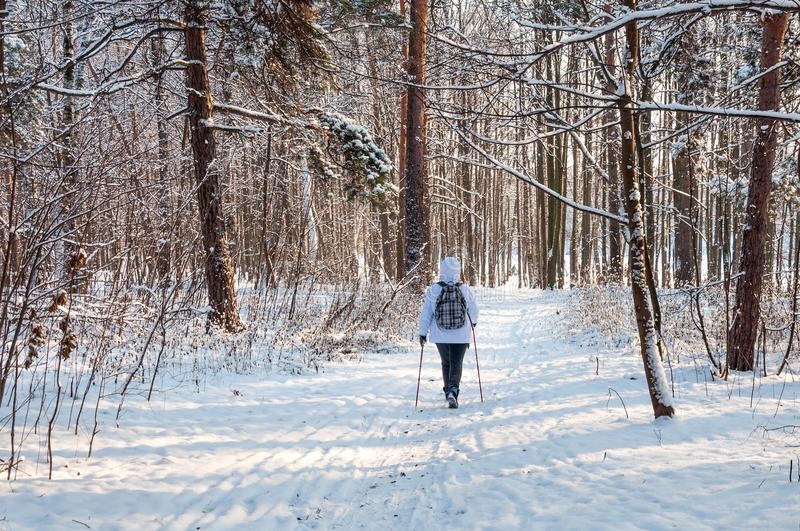 Nordic walking. Woman in a white jacket with a backpack hiking in a cold forest. Scenic beautiful landscape with snow.  royalty free stock photography