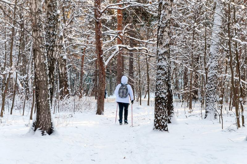 Nordic walking. Woman in a white jacket with a backpack hiking in a cold forest. Scenic beautiful landscape with snow.  royalty free stock photo