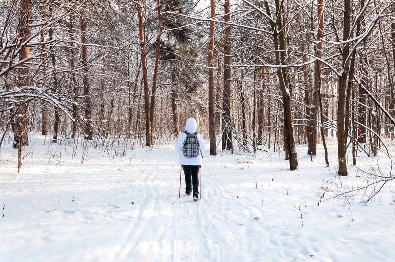 Nordic walking. Woman in a white jacket with a backpack hiking in a cold forest. Scenic beautiful landscape with snow.  royalty free stock image