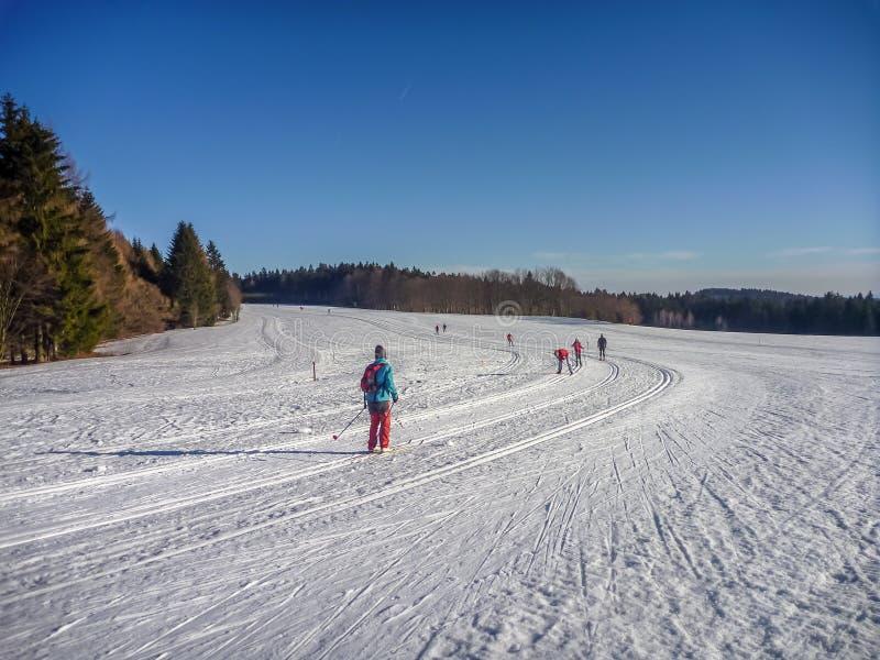 Nordische Ski fahrende Spuren auf schneebedeckten Ebenen mit Koniferenbäumen nahe Nove Mesto Na Morave lizenzfreies stockfoto