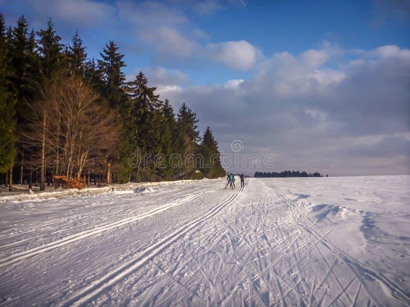 Nordische Ski fahrende Spuren am Rand des Koniferenwaldes nahe Nove Mesto Na Morave lizenzfreie stockbilder