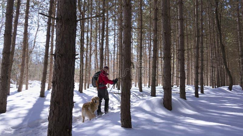 Nordisk skidåkare i skogen med hans hund arkivfoto