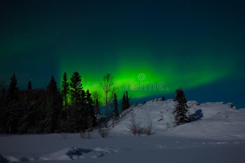 Nordleuchten (Aurora borealis) stockfotos