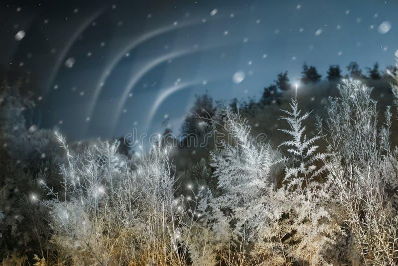 Nordleuchten am Weihnachten lizenzfreie stockfotografie