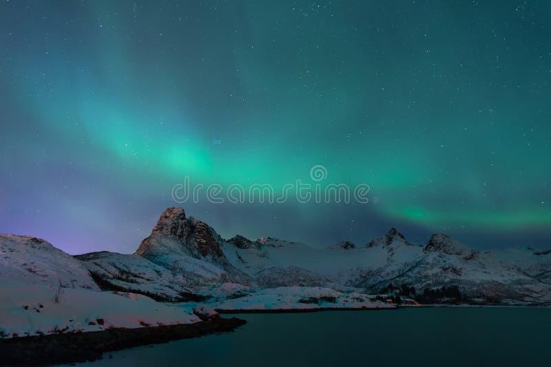 Nordlichter über dem Berg in der Wintersaison, Lofoten-Inseln, Norwegen stockbilder