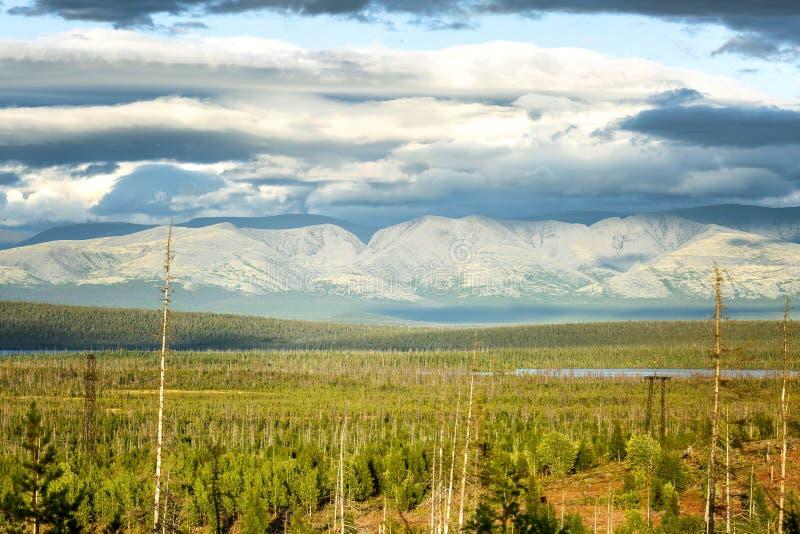 Nordlig grön vegetation på bakgrunden av härliga berg i solljuset bl? ljus sky ursnygg liggande royaltyfri bild
