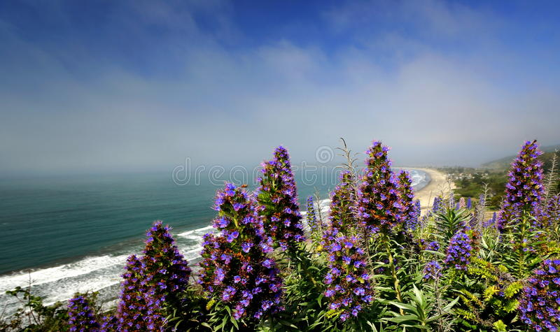 Nordliga Kalifornien royaltyfria foton
