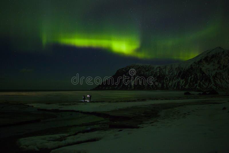 Nordliga ljus Aurora Borealis lofoten norway royaltyfri fotografi