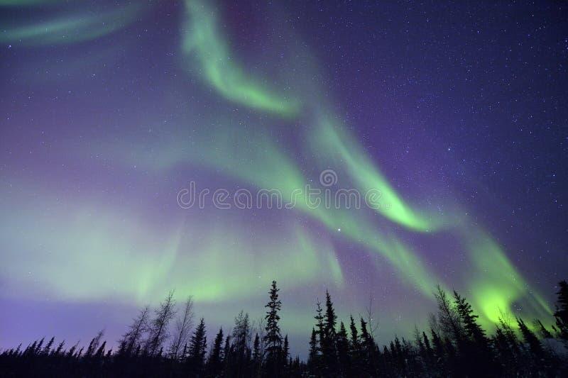 Nordliga ljus och skog arkivfoto