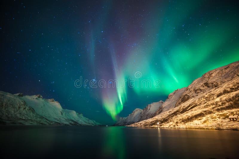 Nordliga ljus ovanför fjordar royaltyfria bilder