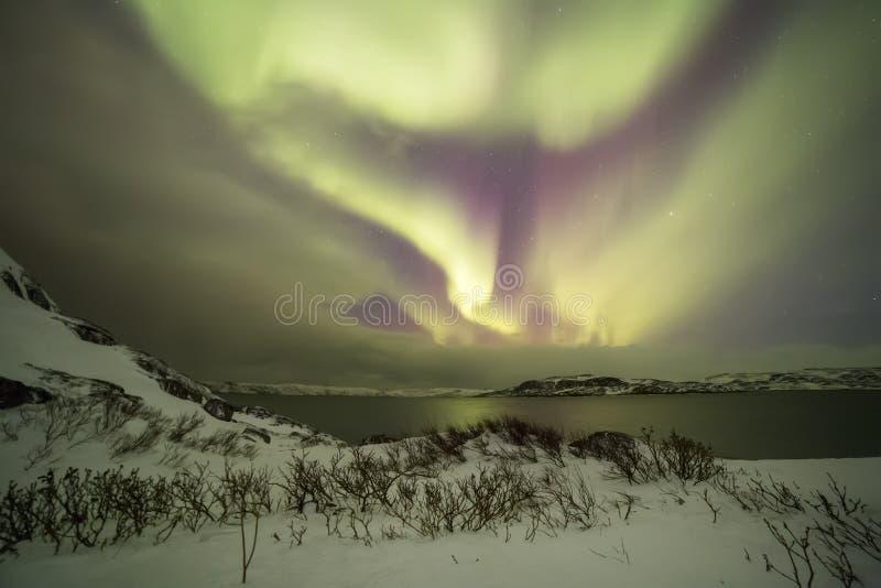Nordliga ljus på Kola Peninsula Teriberka Murmansk regio royaltyfri fotografi