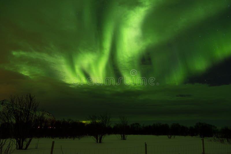 Nordliga ljus som sett på den Lofoten ön, Norge royaltyfri bild
