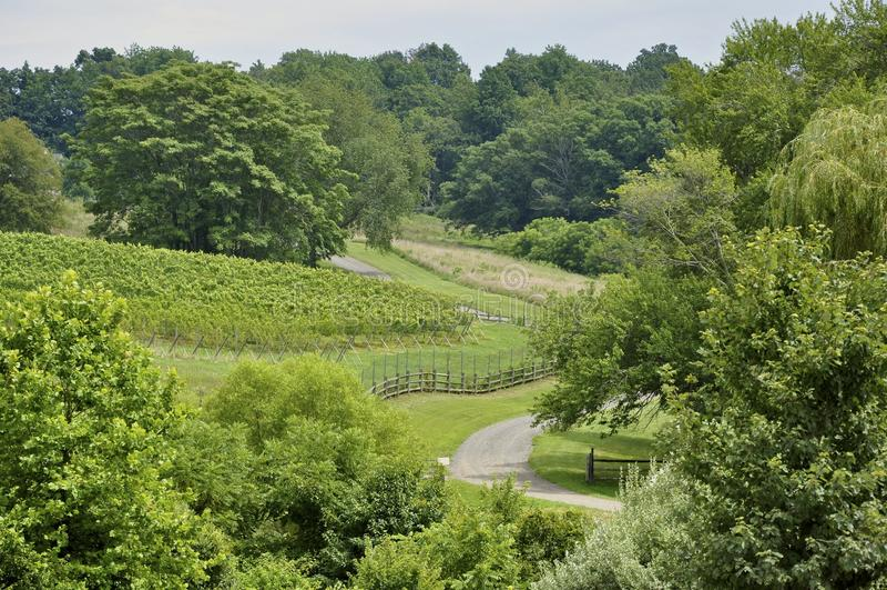 Nordligt Virginia vingårdland arkivfoto