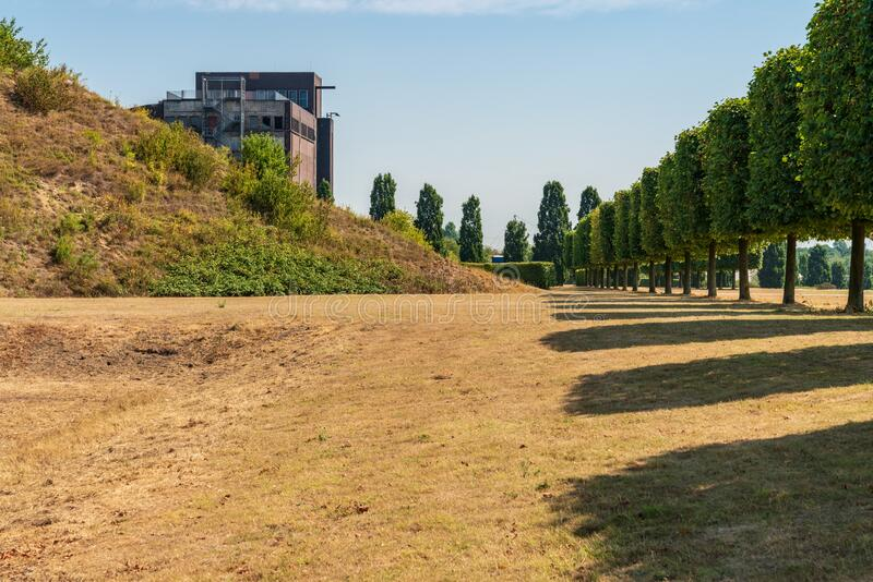 Nordsternpark, Gelsenkirchen, North Rhine-Westfalia, Germany. A row of pruned trees on a dried up meadow, with the ruin of an old coal bunker in the background stock image