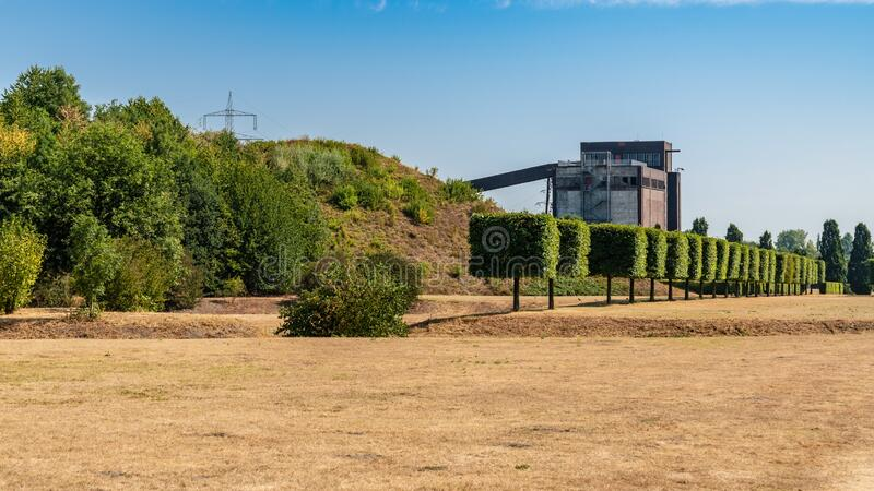 Nordsternpark, Gelsenkirchen, North Rhine-Westfalia, Germany. A row of pruned trees near a parched meadow, and the ruin of an old coal bunker in the background royalty free stock images