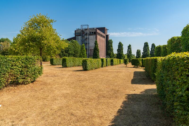 Nordsternpark, Gelsenkirchen, North Rhine-Westfalia, Germany. Rows of pruned hedges on a dried up meadow, with the ruin of an old coal bunker in the background stock images