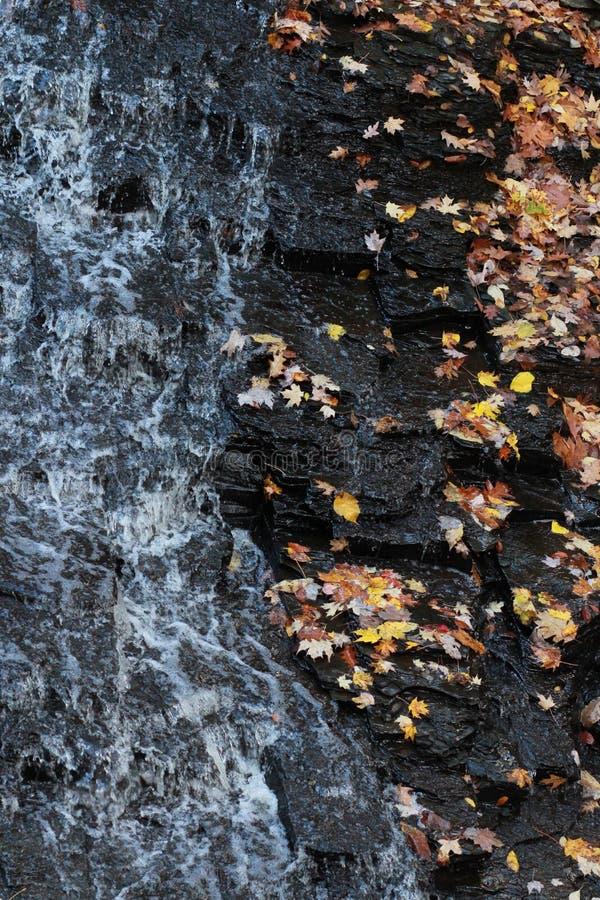 Nordverdruss-Reservierung - Herbst - Cleveland - Ohio - USA lizenzfreie stockfotos