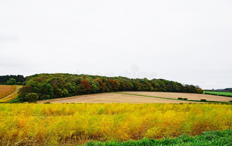 Rural landscape in Norfolk. Asparagus ferns in the foreground with stubble field and tree's in the background of this Norfolk view in the UK royalty free stock photography
