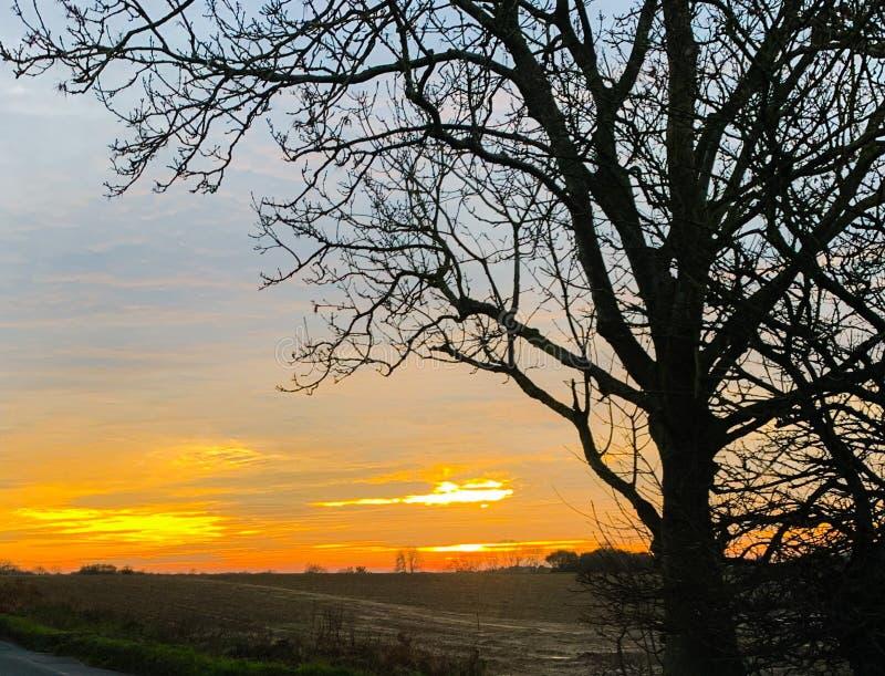 Sunset Norfolk Countryside landscape tree stock images