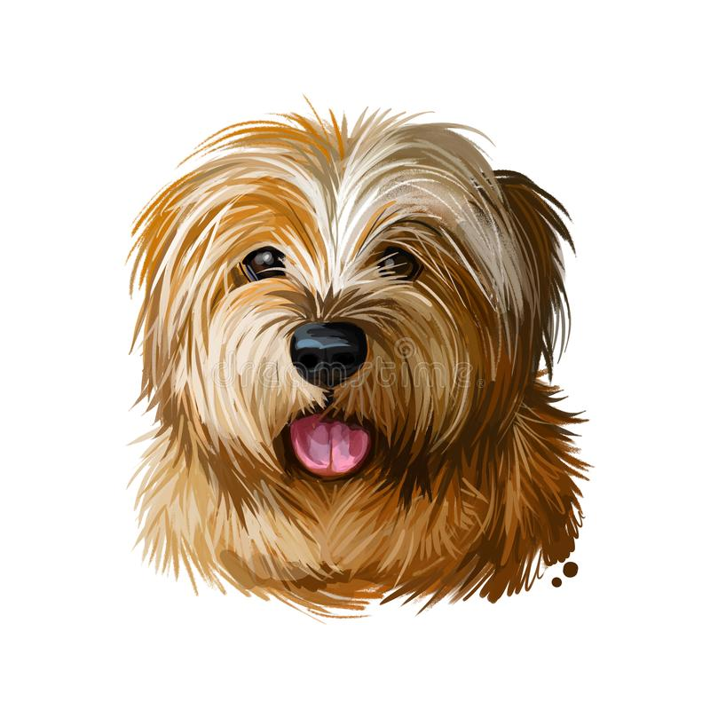 Norfolk terrier, watercolor portrait of canis lupus familiaris digital art. Dog originated from Great Britain, England origin. vector illustration