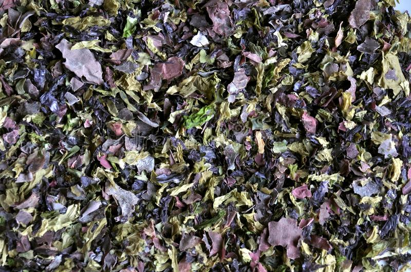 Nori shred algae ,edible seaweed. Nori is the Japanese name for edible seaweed species of the red alga genus Porphyra, including most notably P. yezoensis and P stock photo