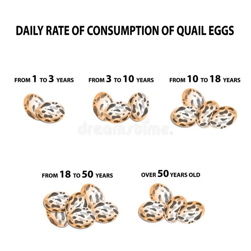 Norma die kwartelseieren eten Afhankelijk van de leeftijd Infographics Vectorillustratie op geïsoleerde achtergrond vector illustratie