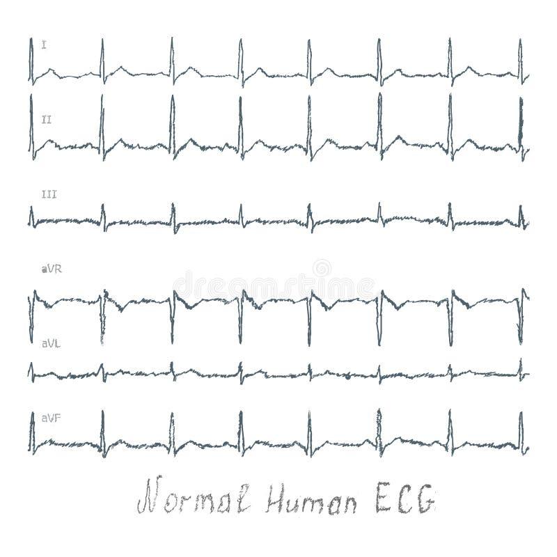 Normal ECG human illustration vector illustration