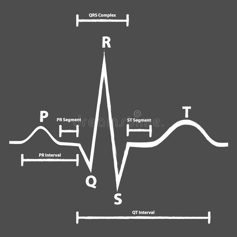 Normal Electrocardiogram Graphic Explained vector illustration