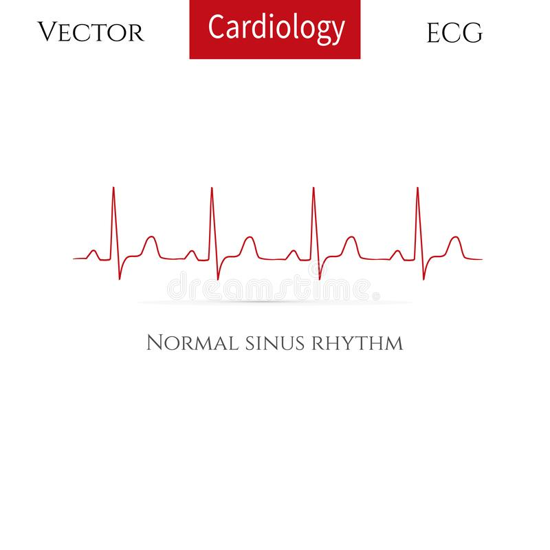 Normal heart rhythm( normal sinus rhythm). vector illustration