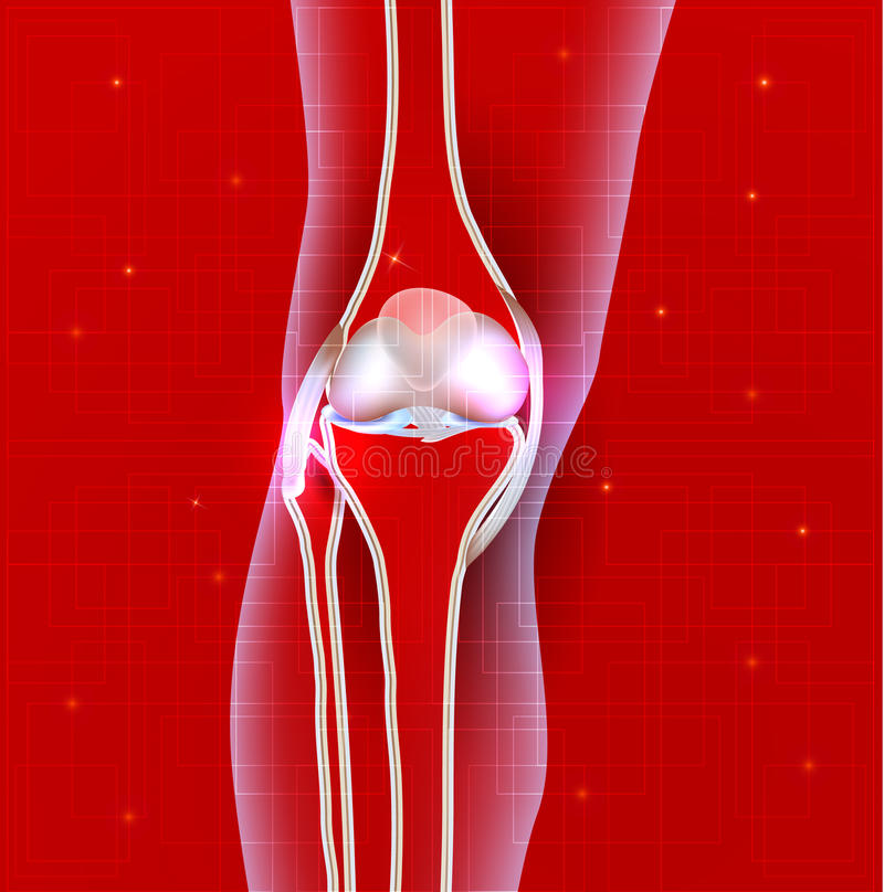 Normal knee joint abstract red background royalty free illustration