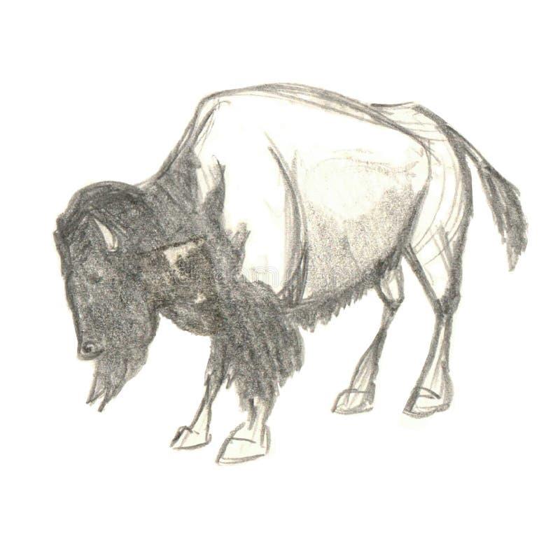 Norr - amerikansk dragen buffelbisonhand royaltyfri illustrationer