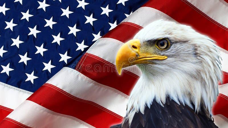 Norr - amerikanska skalliga Eagle på amerikanska flaggan arkivbilder