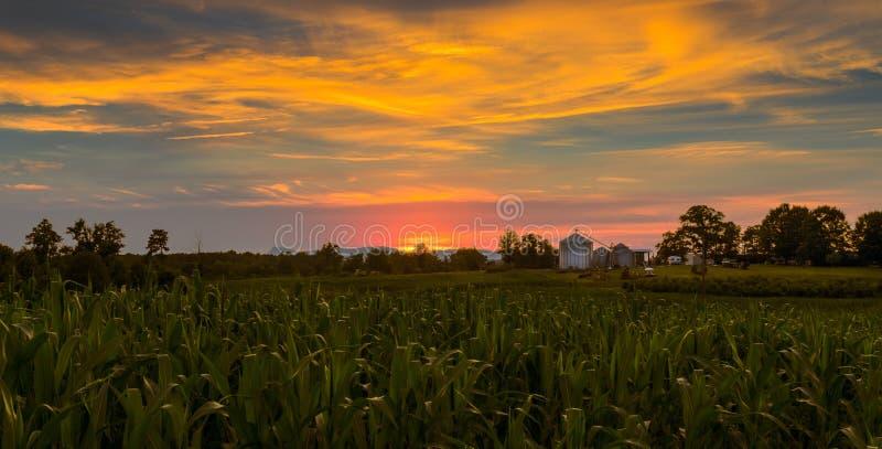 Norr Carolina Sunset över havrefält royaltyfri bild