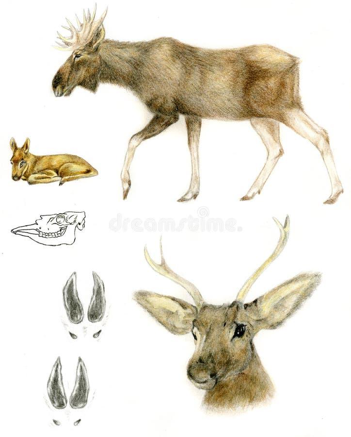 norr europeisk älg stock illustrationer