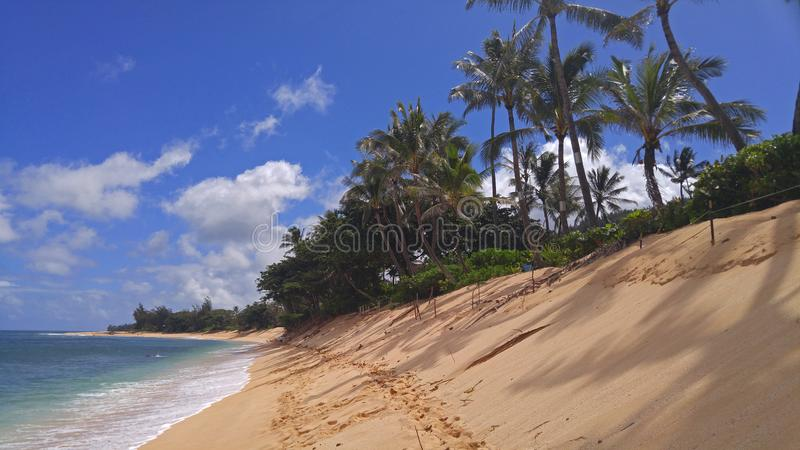 Norr kustHawaii strand med palmträd arkivfoto