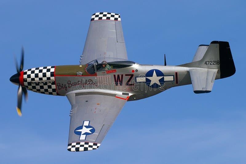 Norr - mustanget för amerikanen P-51 namngav den Stor Härlig dockan royaltyfri fotografi
