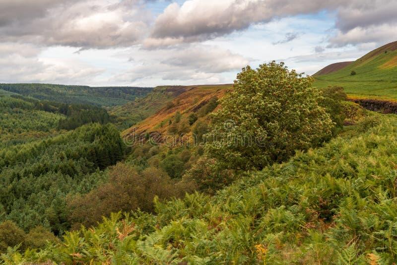Norr York heder landskap, England, UK arkivbilder